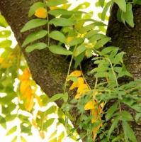 Stam en (herfst)blad