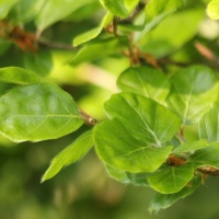 Het frisgroene kleine blad
