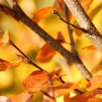 In de herfst
